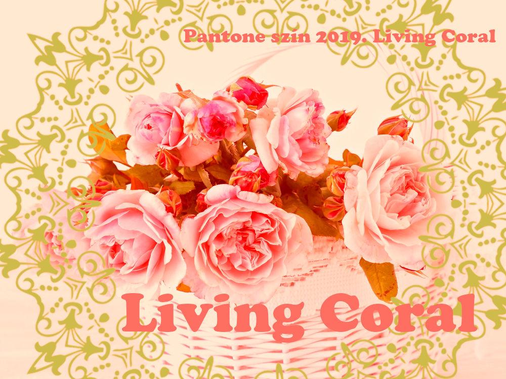 Élő korall 2019 év színe - Pantone Living coral