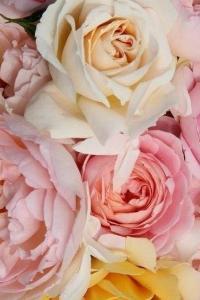 Szép, színes ám egységet alkotó virágcsokor - ilyen a honlap, ha tudod mit szeretnél